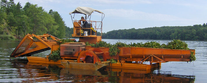 A mechanical harvester removes tons of water chestnuts from the Nashua River