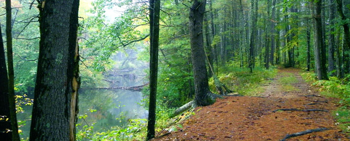 A quiet woodland trail along the Squannacook River in Townsend, MA - Photo by Kim King